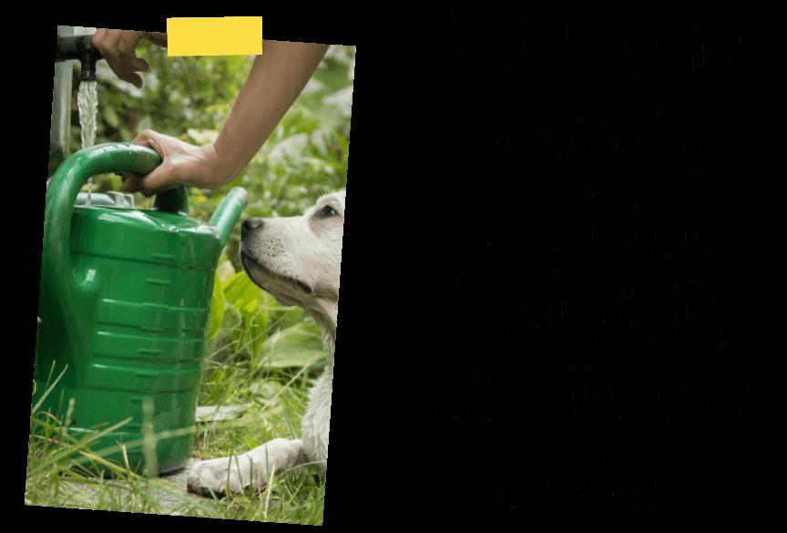 Top Tips - Gardening